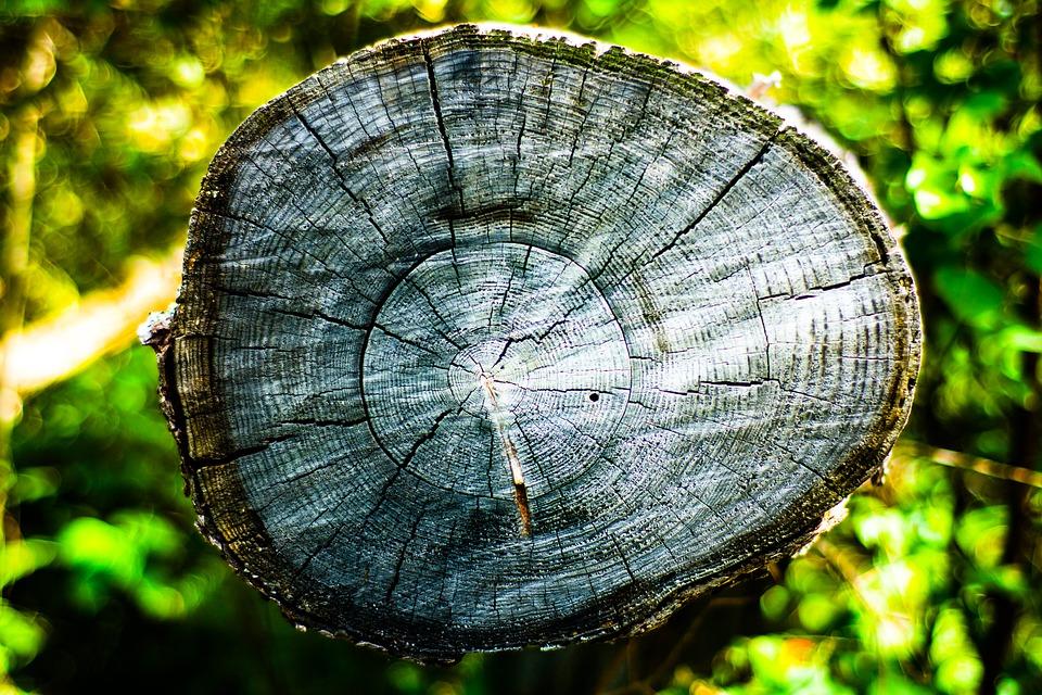 L'albero nel bosco